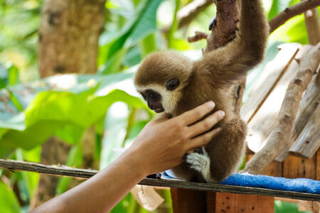 biped: Monkey or Ape is touched in the zoo