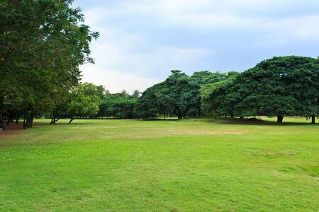 public park: Naturaleza verde en parque p�blico con la nube de lluvia