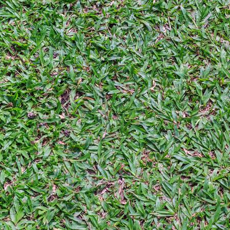tarnish: Dirty green grass surface
