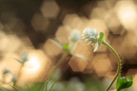 Flower grass on sunset with bokeh or soft focus