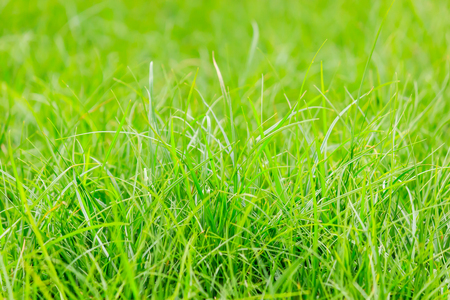 Fresh green grass in public park, select focus and ant view over a green grass out of focus background of grass Stock Photo