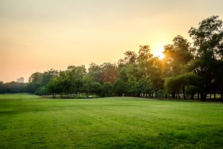 Green nature on public park at sunset