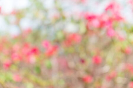 red bush: Green and red bush background. This is green bush and flower that is blurred by camera.