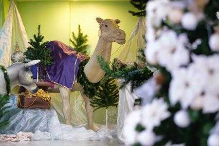 Bangkok, Thailand - December 16, 2016: Christmas Manger scene with models including an empty manger, camel and donkeys.