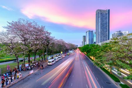 Bangkok, Thailand - 9 april 2017: Tabebuia rosea bomen of roze trompetbomen Een mooie roze bloeiende boom in de tuin. Chatuchak-park in Bangkok
