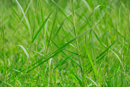 Fresh green grass in public park, select focus and ant view over a green grass out of focus background of grass Stock fotó