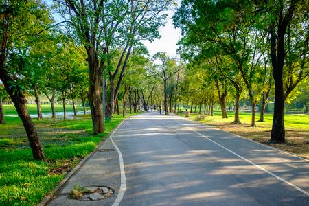 City park at Vachirabenjatas Park (Rot Fai Park) Bangkok, Thailand Reklamní fotografie