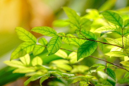 Close up nature view of green leaf on blurred greenery background in garden.