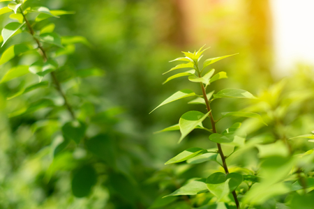 Closeup nature view of green leaf on blurred greenery background in garden with copy space using as background Stock Photo