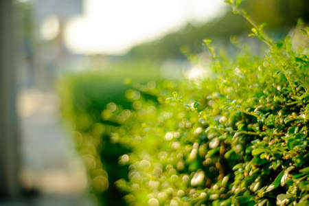 Fresh spring grass in early morning. Natural background.