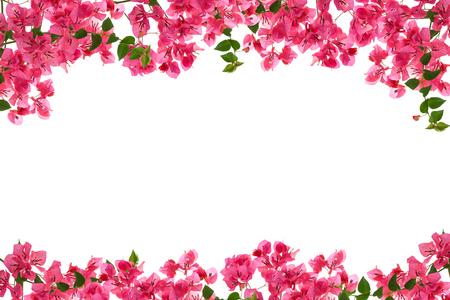 Bougainvillea flower frame on white background ,Provincial flower of phuket thailand Stock Photo