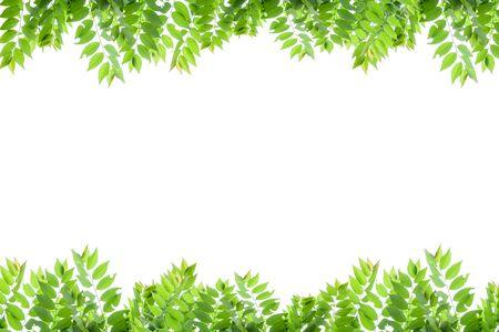 fresh green leaves frame on white background Reklamní fotografie