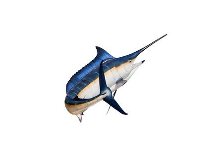 sailfish: Marlin - pez espada, pez de agua salada Pez Vela (Istiophorus) aislado en el fondo blanco