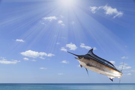 pez vela: Marlin - pez espada, peces de agua salada Pez Vela (Istiophorus) con el mar de la luz del sol y del cielo
