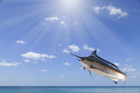 saltwater fish: Marlin - Swordfish,Sailfish saltwater fish (Istiophorus)with sun light sea and sky background