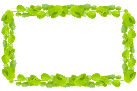 leaves frame: Beautiful Green leaves frame on white background Stock Photo
