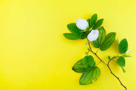 White flower and leafs on yellow paper background. Stock Photo