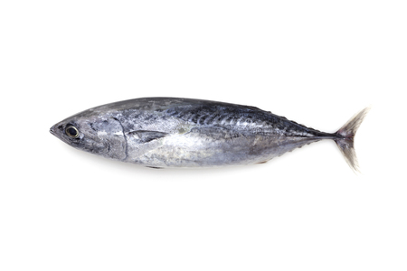 fish tail: Fresh tuna fish isolated on a white background. Stock Photo