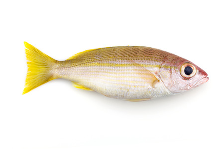 Bigeye Snapper fish isolated on white background Stock Photo