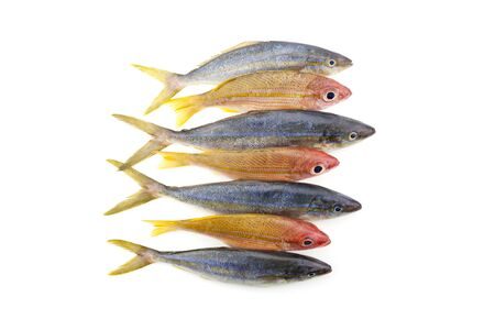 rainbow runner fish with yellowstripe snapper fish isolated on white background Stock Photo