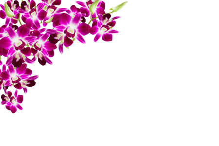 Beautiful orchid flower frame on white background