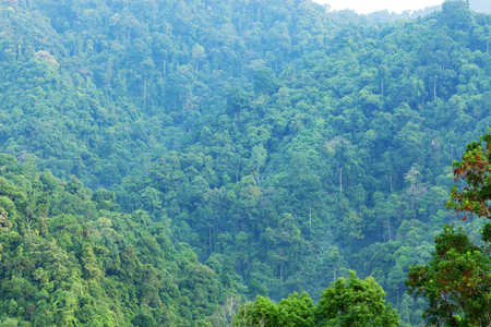 Scenery of the mountains in tropical rainforest Abundant nature in asia thailand Imagens