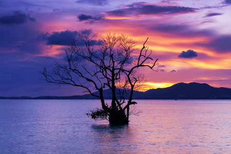 Long exposure image of dramatic sunset or sunrise,sky clouds over mountain with alone tree in tropical sea. Фото со стока