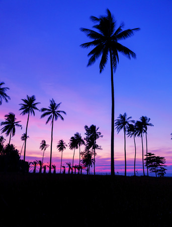 Row of coconut palm trees with beautiful dramatic sky sunset or sunrise over the tropical sea scenery of beautiful nature background in phuket thailand.