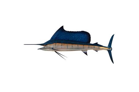 Marlin - Swordfish,Sailfish saltwater fish (Istiophorus) isolated on white background