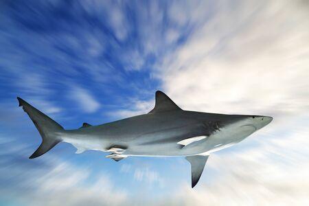 Shark on blue sky background Zoom blur effect background.