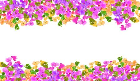 Beautiful Bougainvillea flower frame on white background ,Provincial flower of phuket thailand.