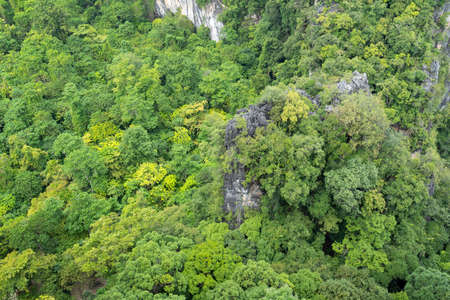 Top down forest trees on mountain peak Rainforest ecosystem and healthy environment concept and nature background, image Texture of green tree forest view from above