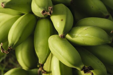 Closeup young green banana photo