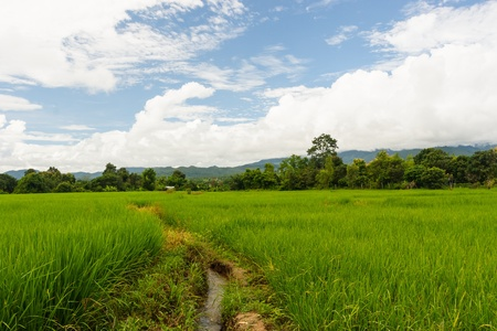 Rice field way Stock Photo
