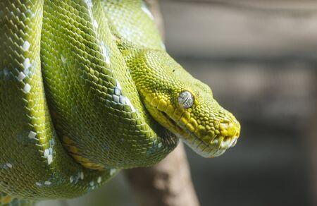sneak: Green sneak