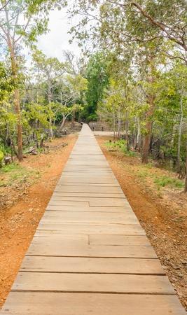 elevated walkway: wooden bridge