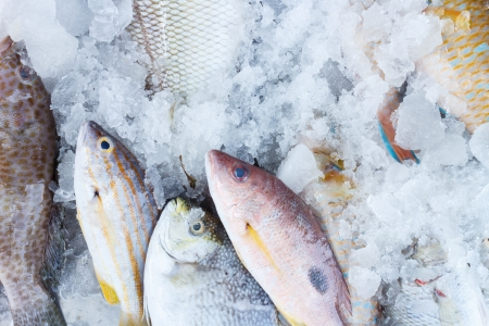 Fresh fish on ice photo