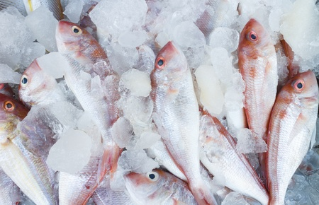 Frozen Red-Snapper photo