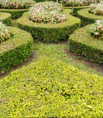 geometric pattern of green hedge flowerbed photo