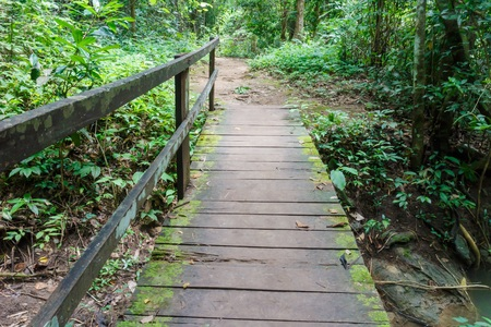 Wooden bridge in the forest photo