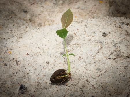 Plant Beginning