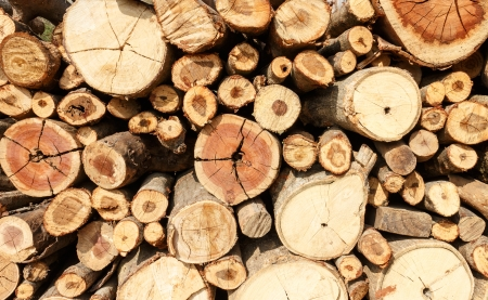Stacked firewood background Imagens