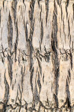 Coconut trees texture