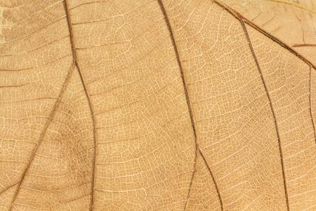 textured autumn brown leaf