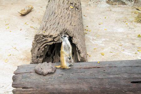 fussy: meercat stilling guard