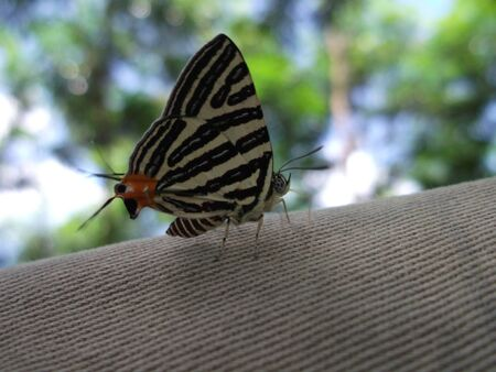 Buttefly Stock Photo