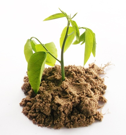Young plant   Stock Photo - 10862353