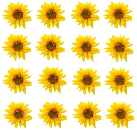 Sunflower.  photo