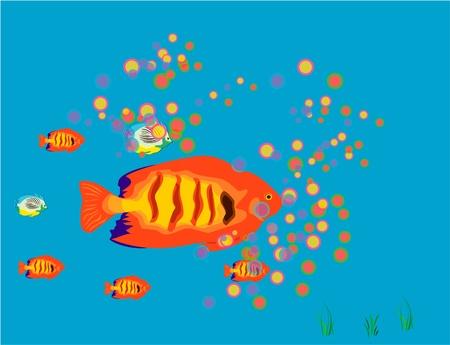 Fish Stock Photo - 12232138