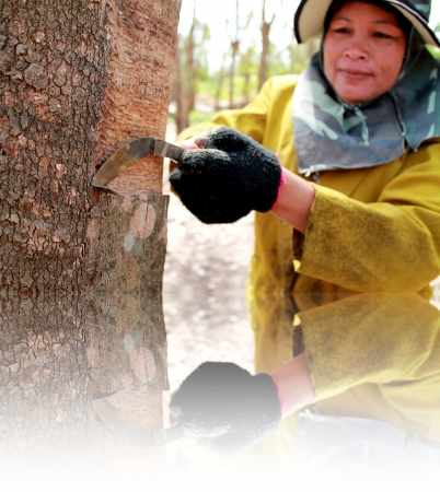 Asian woman rubber tapper
